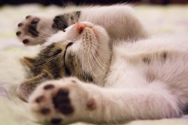 animal-cat-face-close-up-416160_600x
