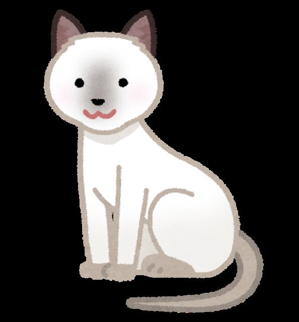 【画像】昨日セミをくれた野良猫にお返しをした結果wwwww